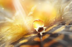 Drops of water dew on a fluffy feather in the light sun close-up macro  on golden brown blurred background. Abstract elegant airy delicious magical bright artistic image.